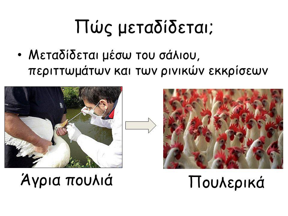 Πώς μεταδίδεται από χώρα σε χώρα ; Μετακινήσεις αποδημητικών πουλιών – Οι αγριόπαπιες «φέρουν» τον ιό χωρίς να νοσούν και διανύουν μεγάλες αποστάσεις μεταδίδοντας τη νόσο