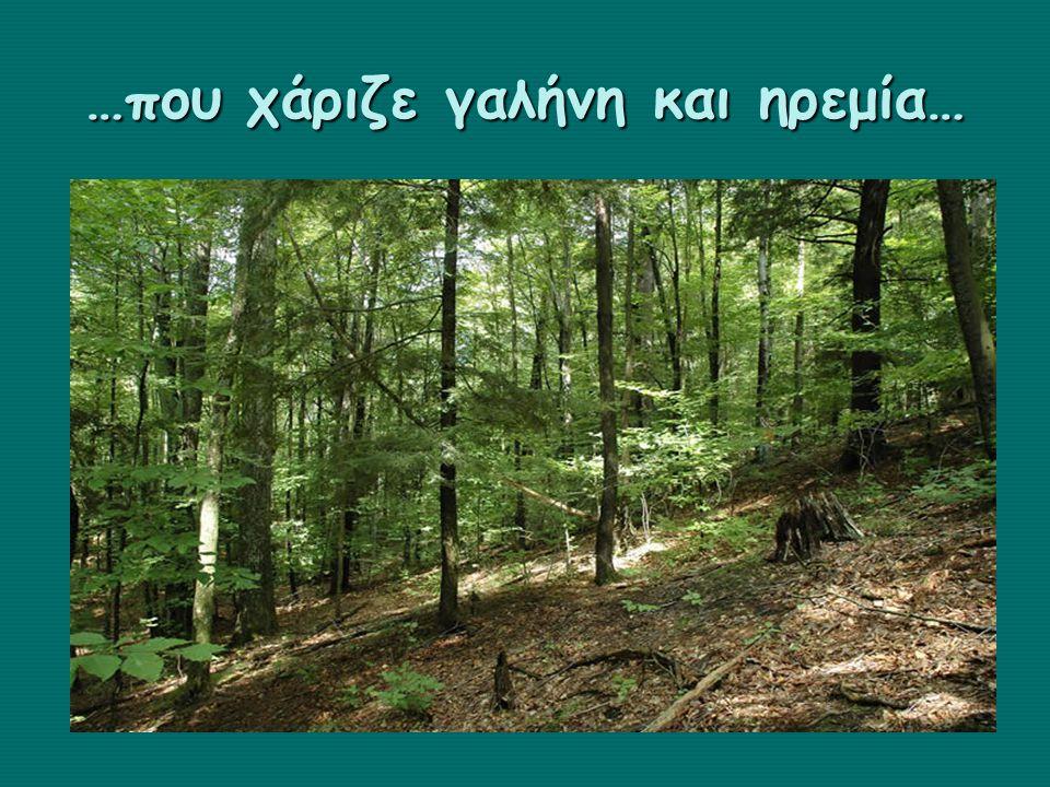 …ένα δάσος με χρώματα