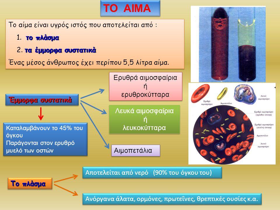 Ερυθρά αιμοσφαίρια ή ερυθροκύτταρα Ερυθρά αιμοσφαίρια ή ερυθροκύτταρα Είναι πάρα πολλά (5.000.000 ανά mm 3 ) Ρόλος : η μεταφορά οξυγόνου στους ιστούς και η απομάκρυνση από αυτούς του διοξειδίου του άνθρακα Μορφή: έχουν σχήμα αμφίκοιλου δίσκου και είναι παχύτερα στην περιφέρεια απ΄ ότι στο κέντρο Δεν διαθέτουν πυρήνα Περιέχουν κυρίως αιμοσφαιρίνη, που δίνει και το χαρακτηριστικό κόκκινο χρώμα Αιμοσφαιρίνη Α αίμη Κάθε μόριο αίμης περιέχει σίδηρο Παράγονται στον ερυθρό μυελό των οστών Ζουν περίπου 120 ημέρες Καταστρέφονται στο ήπαρ και στη σπλήνα