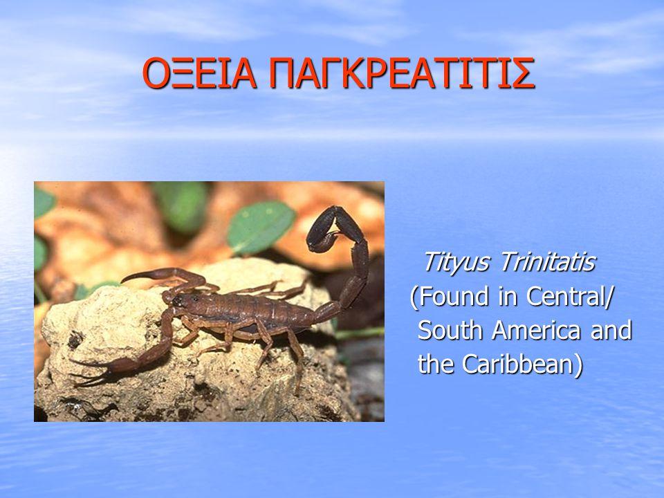 ΟΞΕΙΑ ΠΑΓΚΡΕΑΤΙΤΙΣ ΟΞΕΙΑ ΠΑΓΚΡΕΑΤΙΤΙΣ  Tityus Trinitatis  (Found in Central/  South America and  the Caribbean)