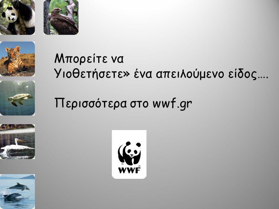 Μπορείτε να Υιοθετήσετε» ένα απειλούμενο είδος…. Περισσότερα στο wwf.gr