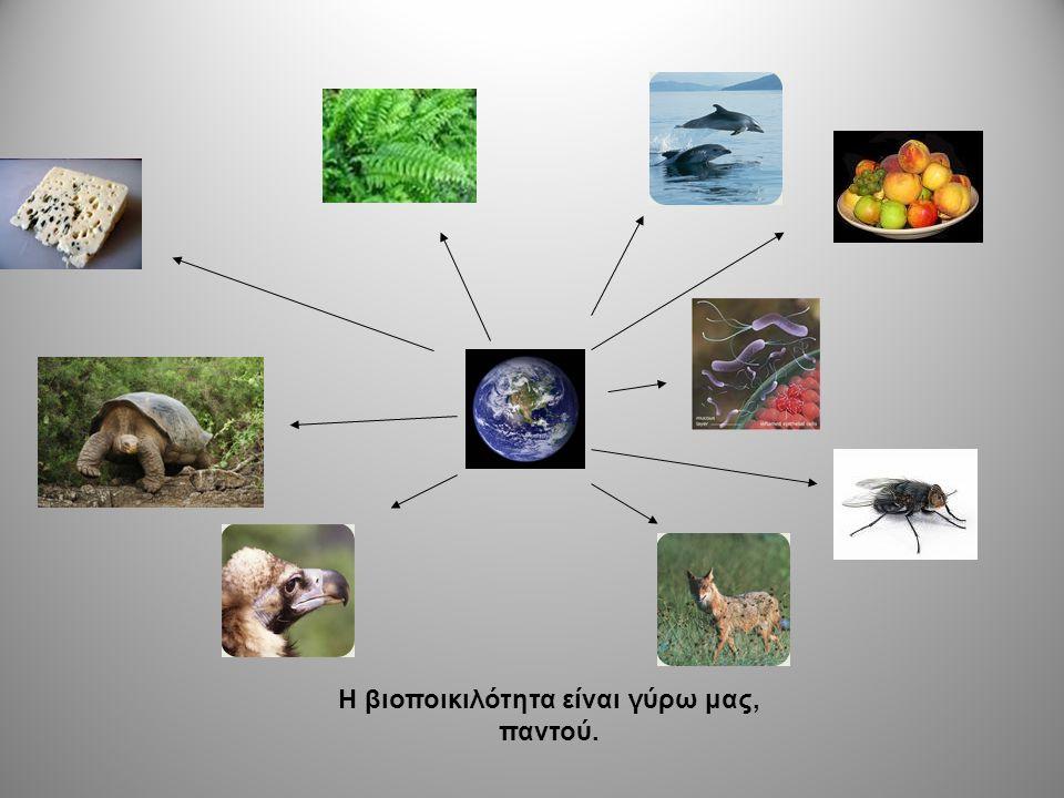 Η βιοποικιλότητα είναι γύρω μας, παντού.