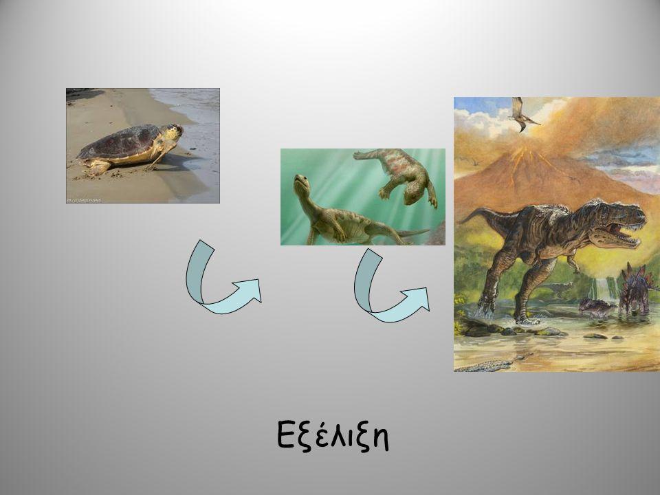 Η ζωή στη Γη ήταν πάντα όπως την ξέρουμε σήμερα; Τα ζώα, τα φυτά, οι οργανισμοί, ο άνθρωπος ήταν πάντα όπως είναι σήμερα;