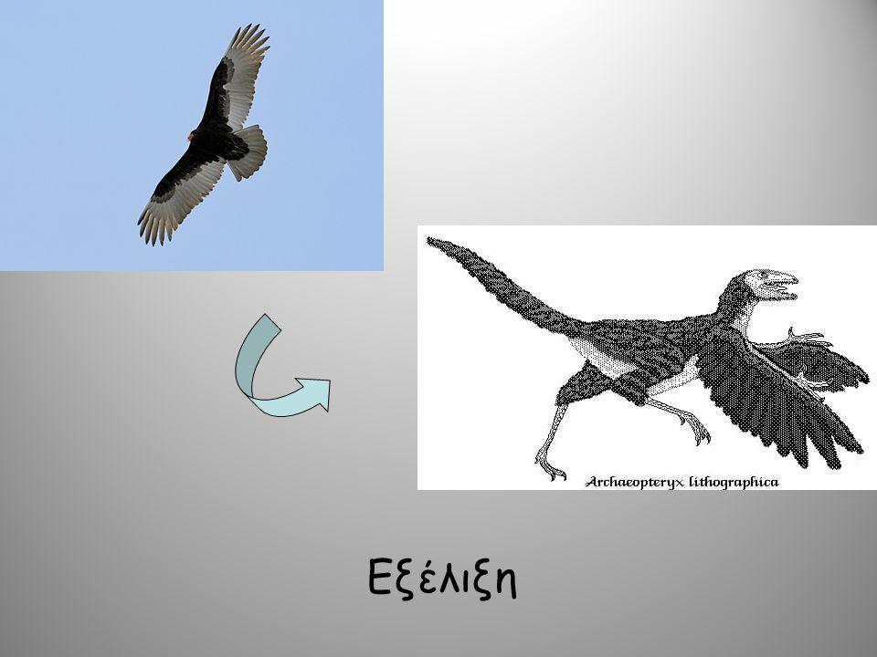 Εξέλιξη