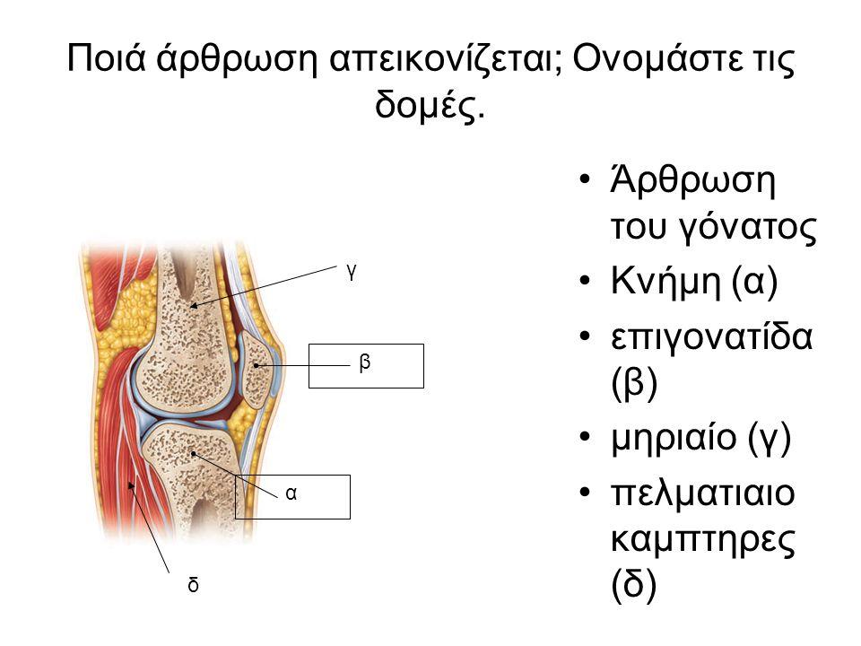 Ποιά άρθρωση απεικονίζεται; Ονομάστε τις δομές. Άρθρωση του γόνατος Κνήμη (α) επιγονατίδα (β) μηριαίο (γ) πελματιαιο καμπτηρες (δ) β α γ δ