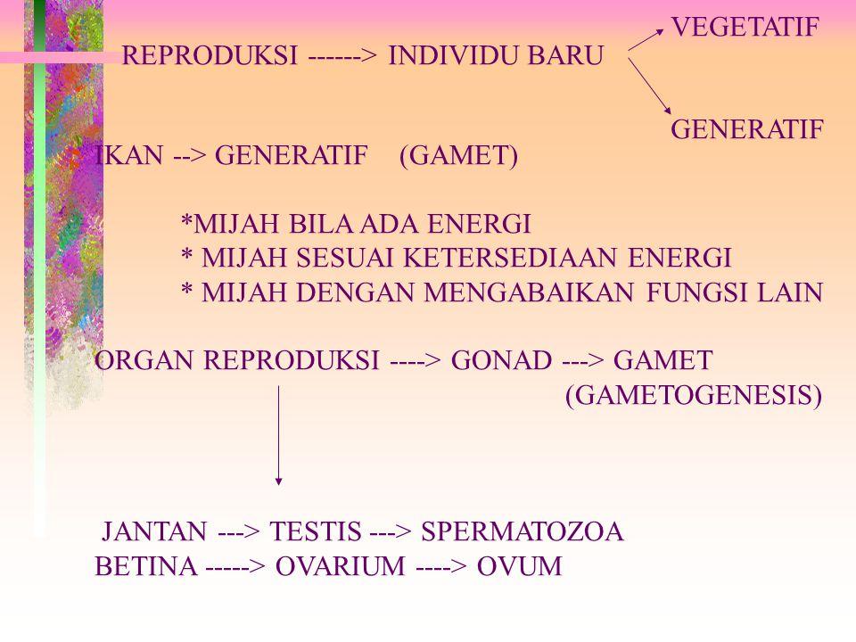 REPRODUKSI ------> INDIVIDU BARU VEGETATIF GENERATIF IKAN --> GENERATIF (GAMET) *MIJAH BILA ADA ENERGI * MIJAH SESUAI KETERSEDIAAN ENERGI * MIJAH DENGAN MENGABAIKAN FUNGSI LAIN ORGAN REPRODUKSI ----> GONAD ---> GAMET (GAMETOGENESIS) JANTAN ---> TESTIS ---> SPERMATOZOA BETINA -----> OVARIUM ----> OVUM