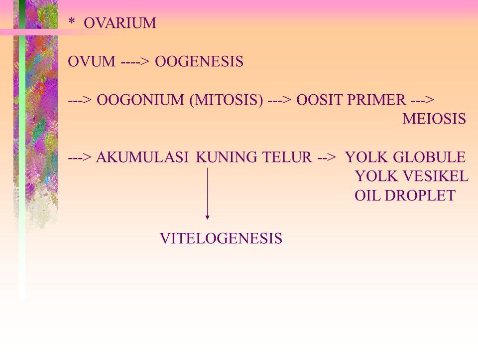 * OVARIUM OVUM ----> OOGENESIS ---> OOGONIUM (MITOSIS) ---> OOSIT PRIMER ---> MEIOSIS ---> AKUMULASI KUNING TELUR --> YOLK GLOBULE YOLK VESIKEL OIL DROPLET VITELOGENESIS