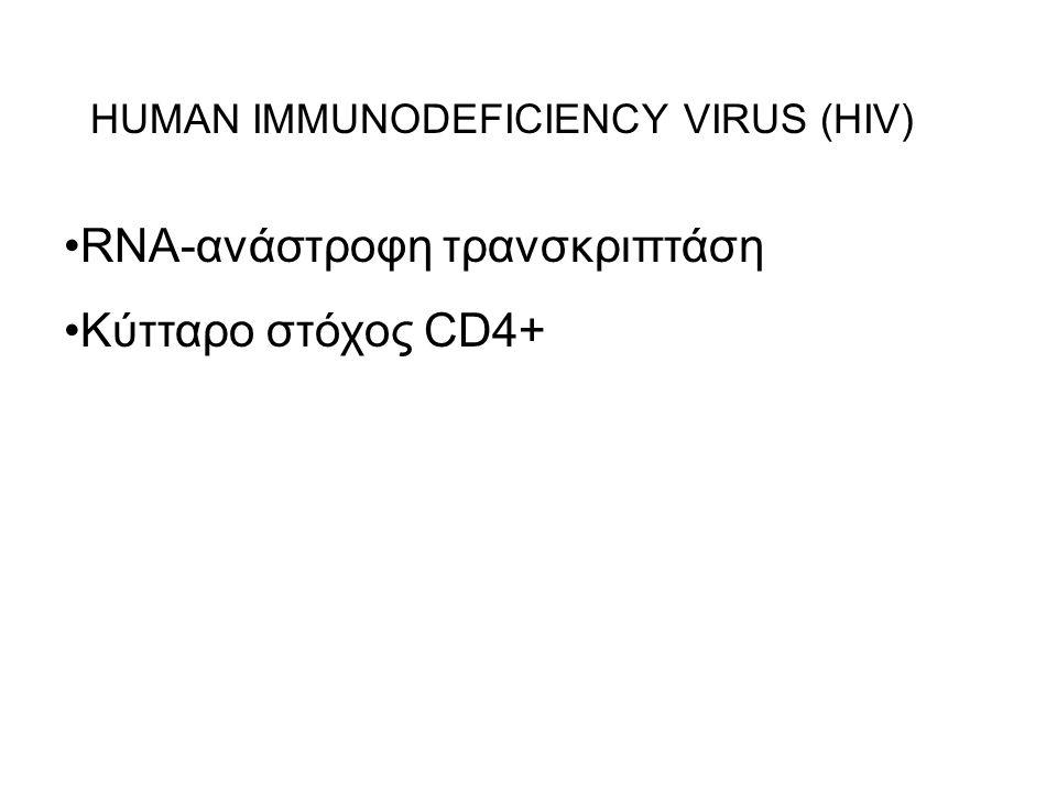 RNA-ανάστροφη τρανσκριπτάση Κύτταρο στόχος CD4+ HUMAN IMMUNODEFICIENCY VIRUS (HIV)