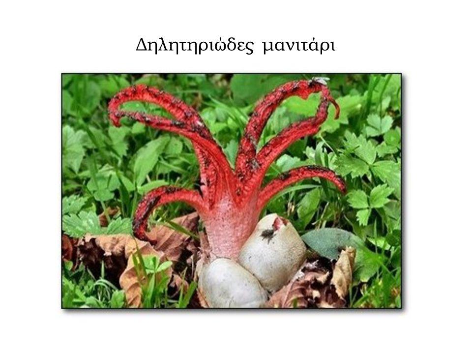 Δηλητηριώδης ντομάτα, αυξάνεται με ραγδαίους ρυθμούς και αντέχει σε συνθήκες ξηρασίας