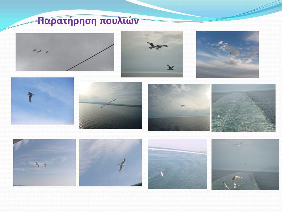 Παρατήρηση πουλιών