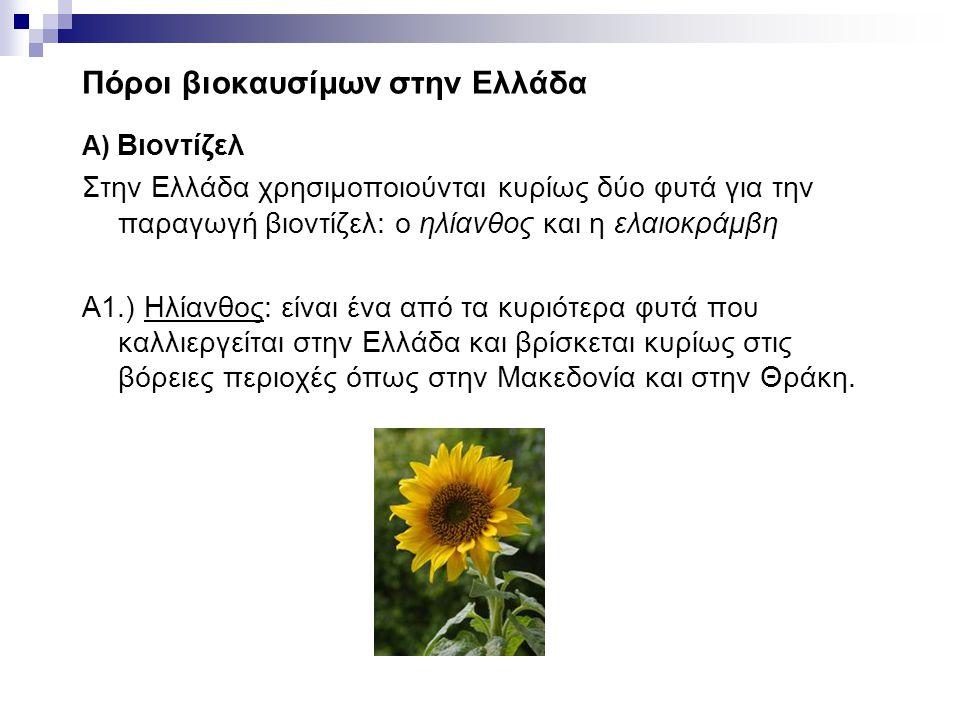 Πόροι βιοκαυσίμων στην Ελλάδα Α) Βιοντίζελ Στην Ελλάδα χρησιμοποιούνται κυρίως δύο φυτά για την παραγωγή βιοντίζελ: ο ηλίανθος και η ελαιοκράμβη A1.)