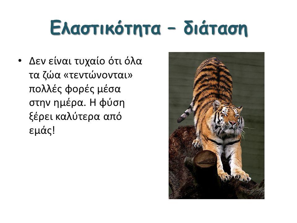 Ελαστικότητα – διάταση Δεν είναι τυχαίο ότι όλα τα ζώα «τεντώνονται» πολλές φορές μέσα στην ημέρα. Η φύση ξέρει καλύτερα από εμάς!