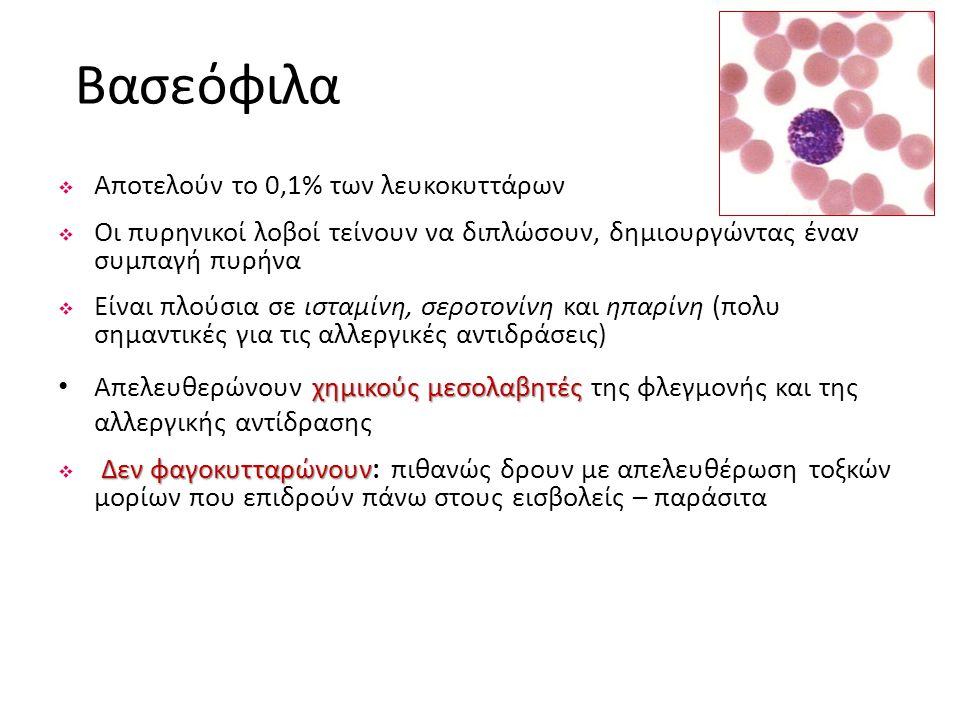 Βασεόφιλα  Αποτελούν το 0,1% των λευκοκυττάρων  Οι πυρηνικοί λοβοί τείνουν να διπλώσουν, δημιουργώντας έναν συμπαγή πυρήνα  Είναι πλούσια σε ισταμί