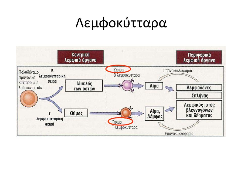 Λεμφοκύτταρα