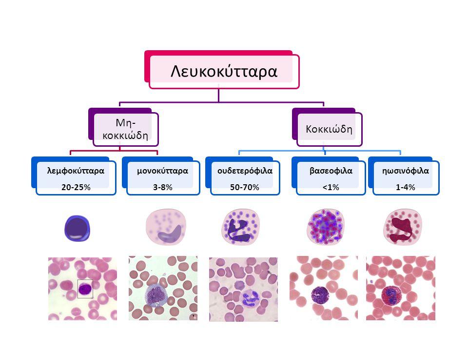 Λευκοκύτταρα Μη- κοκκιώδη λεμφοκύτταρα 20-25% μονοκύτταρα 3-8% Κοκκιώδη ουδετερόφιλα 50-70% βασεοφιλα <1% ηωσινόφιλα 1-4%