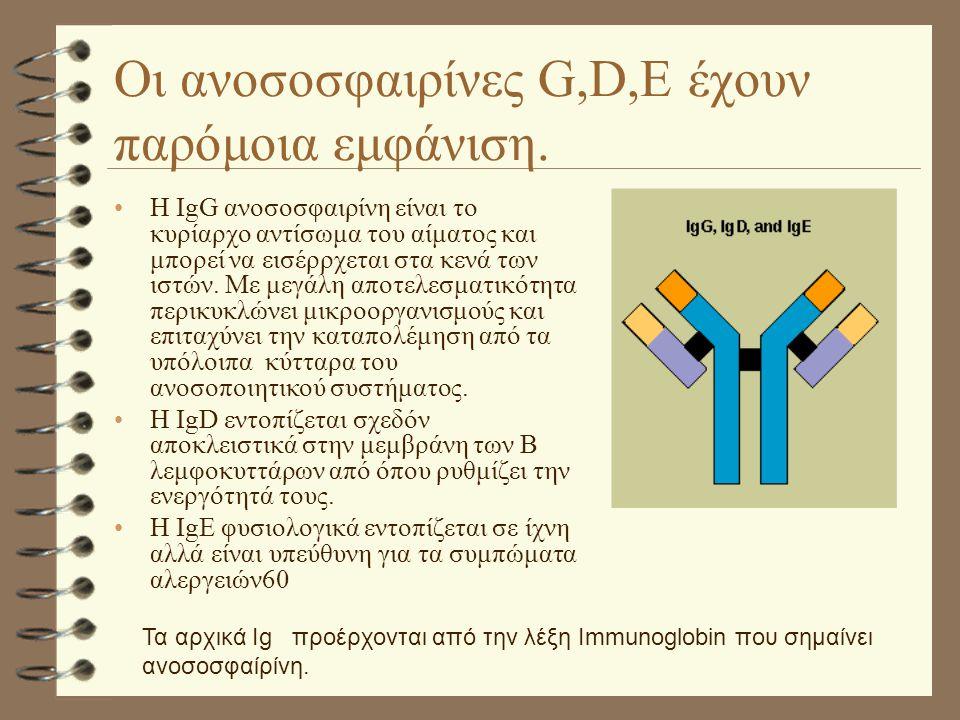 Οι ανοσοσφαιρίνες G,D,E έχουν παρόμοια εμφάνιση. Η IgG ανοσοσφαιρίνη είναι το κυρίαρχο αντίσωμα του αίματος και μπορεί να εισέρρχεται στα κενά των ιστ