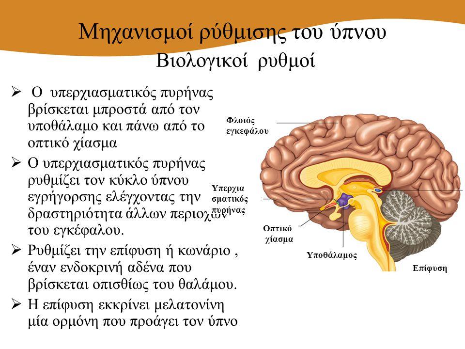  O υπερχιασματικός πυρήνας βρίσκεται μπροστά από τον υποθάλαμο και πάνω από το οπτικό χίασμα  Ο υπερχιασματικός πυρήνας ρυθμίζει τον κύκλο ύπνου εγρ