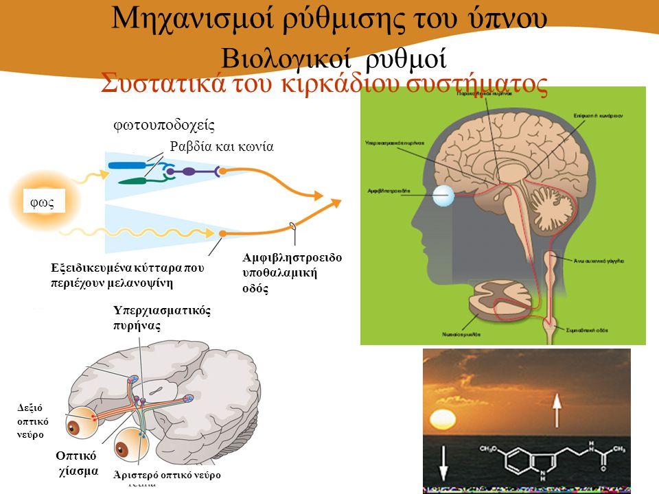 φως φωτουποδοχείς Αμφιβληστροειδο υποθαλαμική οδός Εξειδικευμένα κύτταρα που περιέχουν μελανοψίνη Ραβδία και κωνία Υπερχιασματικός πυρήνας Άριστερό οπ