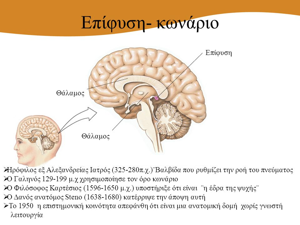 Επίφυση- κωνάριο  Ηρόφιλος εξ Αλεξανδρείας Ιατρός (325-280π.χ.)¨Βαλβίδα που ρυθμίζει την ροή του πνεύματος  Ο Γαληνός 129-199 μ.χ χρησιμοποίησε τον