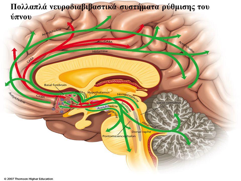 Πολλαπλά νευροδιαβιβαστικά συστήματα ρύθμισης του ύπνου
