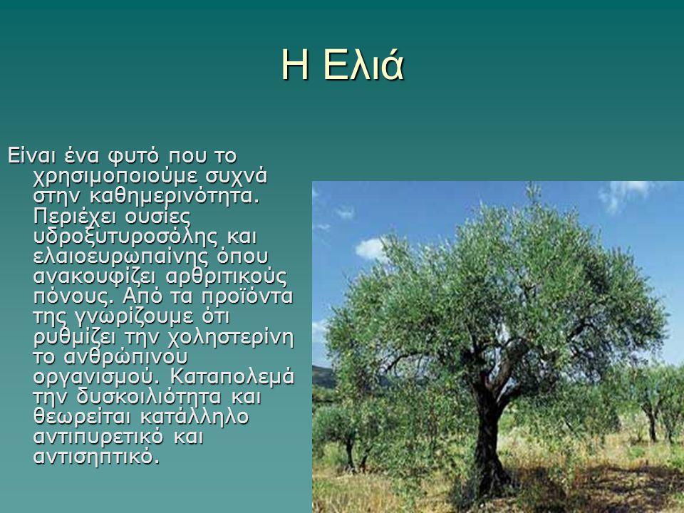 Η Ελιά Είναι ένα φυτό που το χρησιμοποιούμε συχνά στην καθημερινότητα. Περιέχει ουσίες υδροξυτυροσόλης και ελαιοευρωπαίνης όπου ανακουφίζει αρθριτικού