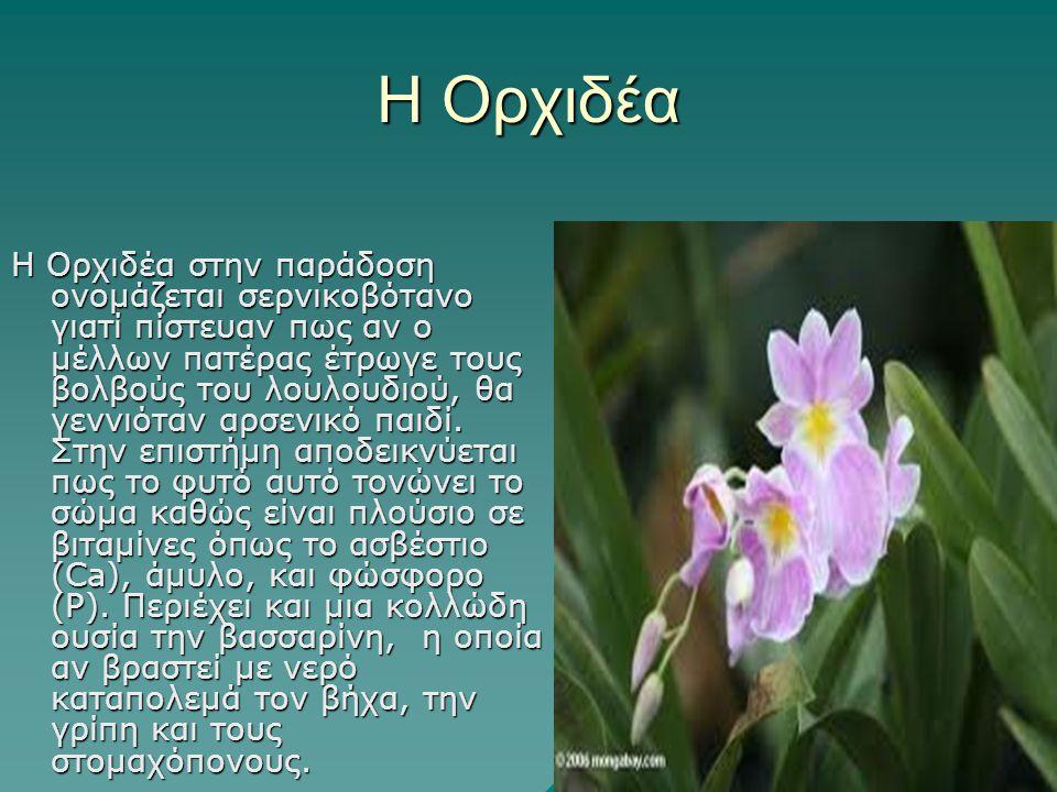 Η Ορχιδέα Η Ορχιδέα στην παράδοση ονομάζεται σερνικοβότανο γιατί πίστευαν πως αν ο μέλλων πατέρας έτρωγε τους βολβούς του λουλουδιού, θα γεννιόταν αρσ