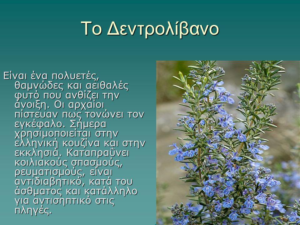 Το Δεντρολίβανο Είναι ένα πολυετές, θαμνώδες και αειθαλές φυτό που ανθίζει την άνοιξη. Οι αρχαίοι πίστευαν πως τονώνει τον εγκέφαλο. Σήμερα χρησιμοποι