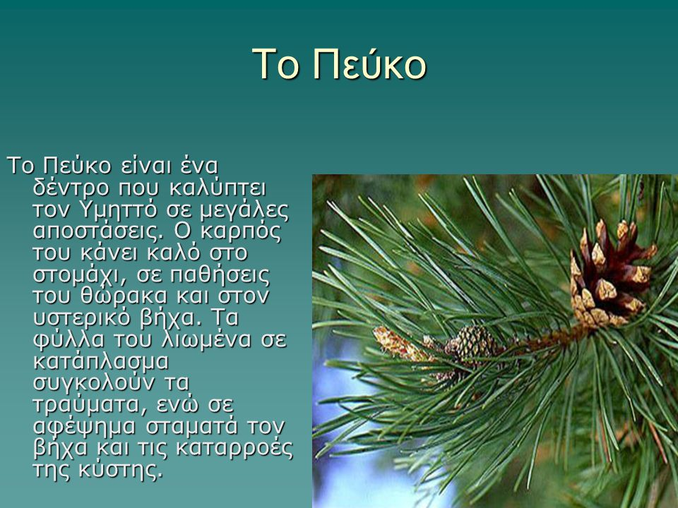 Το Πεύκο Το Πεύκο είναι ένα δέντρο που καλύπτει τον Υμηττό σε μεγάλες αποστάσεις. Ο καρπός του κάνει καλό στο στομάχι, σε παθήσεις του θώρακα και στον