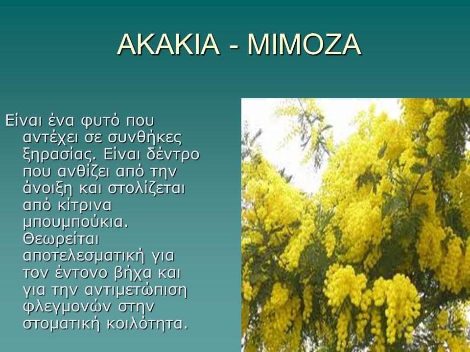 ΑΚΑΚΙΑ - ΜΙΜΟΖΑ ΑΚΑΚΙΑ - ΜΙΜΟΖΑ Είναι ένα φυτό που αντέχει σε συνθήκες ξηρασίας. Είναι δέντρο που ανθίζει από την άνοιξη και στολίζεται από κίτρινα μπ