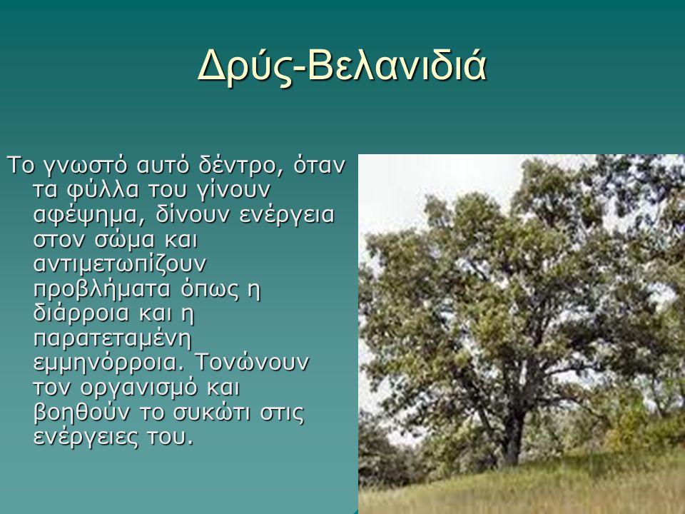 Δρύς-Βελανιδιά Το γνωστό αυτό δέντρο, όταν τα φύλλα του γίνουν αφέψημα, δίνουν ενέργεια στον σώμα και αντιμετωπίζουν προβλήματα όπως η διάρροια και η