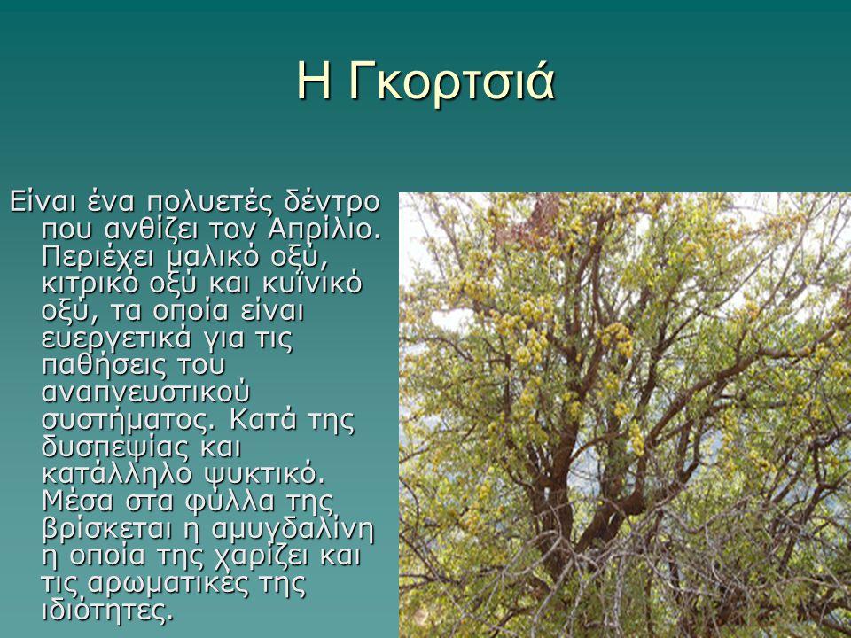 Η Γκορτσιά Είναι ένα πολυετές δέντρο που ανθίζει τον Απρίλιο. Περιέχει μαλικό οξύ, κιτρικό οξύ και κυϊνικό οξύ, τα οποία είναι ευεργετικά για τις παθή