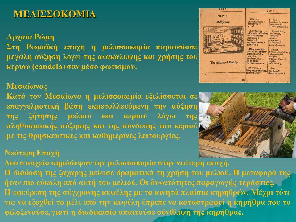 ΜΕΛΙΣΣΟΚΟΜΙΑ Αρχαία Ρώμη Στη Ρωμαϊκή εποχή η μελισσοκομία παρουσίασε μεγάλη αύξηση λόγω της ανακάλυψης και χρήσης του κεριού (candela) σαν μέσο φωτισμ