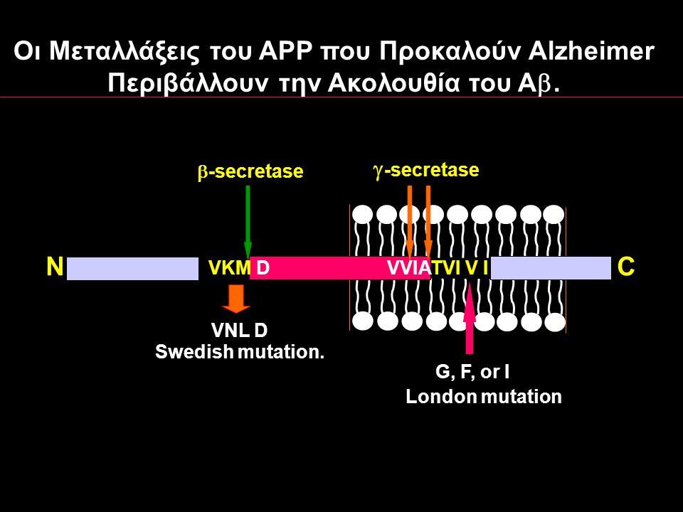 VNL D G, F, or I London mutation Swedish mutation. NC VKM D TVI V IVVIA  -secretase  -secretase Oι Mεταλλάξεις του APP που Προκαλoύν Αlzheimer Περιβ