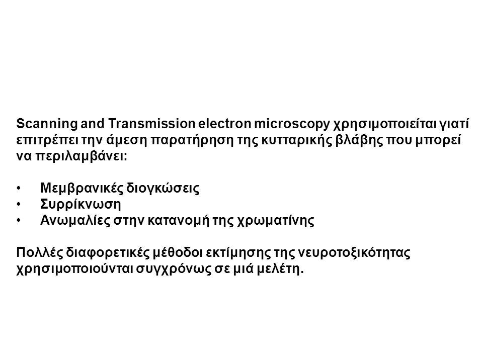 Scanning and Transmission electron microscopy χρησιμοποιείται γιατί επιτρέπει την άμεση παρατήρηση της κυτταρικής βλάβης που μπορεί να περιλαμβάνει: Μ