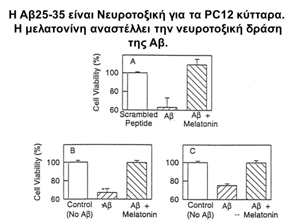 Η Αβ25-35 είναι Νευροτοξική για τα PC12 κύτταρα. Η μελατονίνη αναστέλλει την νευροτοξική δράση της Αβ.