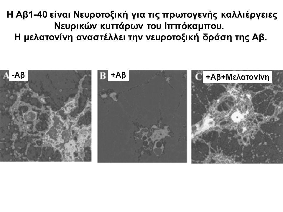 Η Αβ1-40 είναι Νευροτοξική για τις πρωτoγενής καλλιέργειες Νευρικών κυττάρων του Ιππόκαμπου. Η μελατονίνη αναστέλλει την νευροτοξική δράση της Αβ. -Αβ