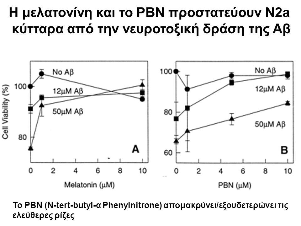 Η μελατονίνη και το PBN προστατεύουν N2a κύτταρα από την νευροτοξική δράση της Αβ Το PBN (N-tert-butyl-α Phenylnitrone) απομακρύνει/εξουδετερώνει τις