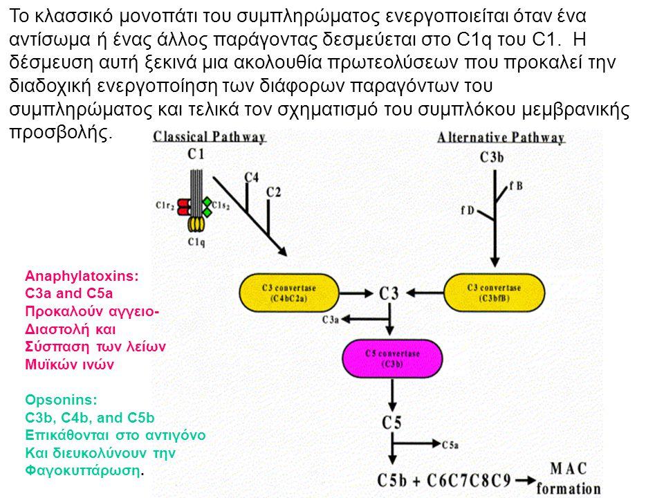 Anaphylatoxins: C3a and C5a Προκαλούν αγγειο- Διαστολή και Σύσπαση των λείων Μυϊκών ινών Opsonins: C3b, C4b, and C5b Επικάθονται στο αντιγόνο Και διευ