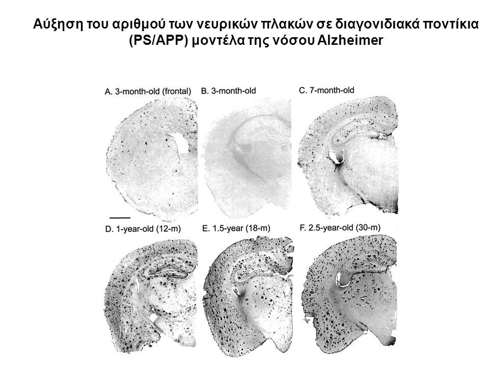Αύξηση του αριθμού των νευρικών πλακών σε διαγονιδιακά ποντίκια (PS/APP) μοντέλα της νόσου Alzheimer