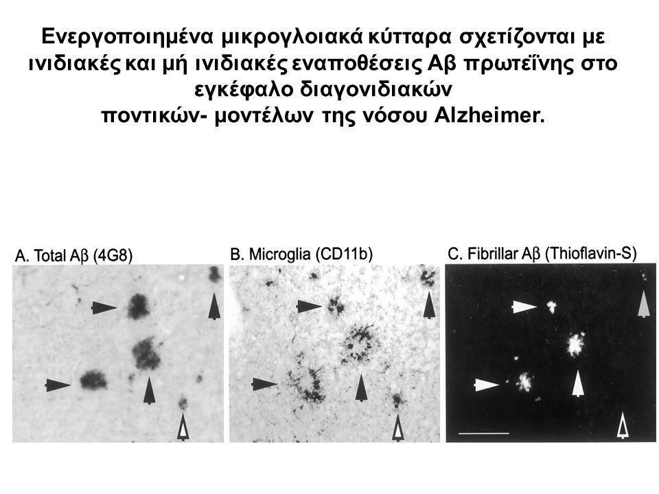 Ενεργοποιημένα μικρογλοιακά κύτταρα σχετίζονται με ινιδιακές και μή ινιδιακές εναποθέσεις Αβ πρωτεΐνης στο εγκέφαλο διαγονιδιακών ποντικών- μοντέλων τ