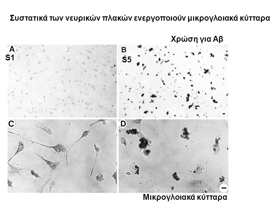 S1 S5 Χρώση για Αβ Μικρογλοιακά κύτταρα Συστατικά των νευρικών πλακών ενεργοποιούν μικρογλοιακά κύτταρα