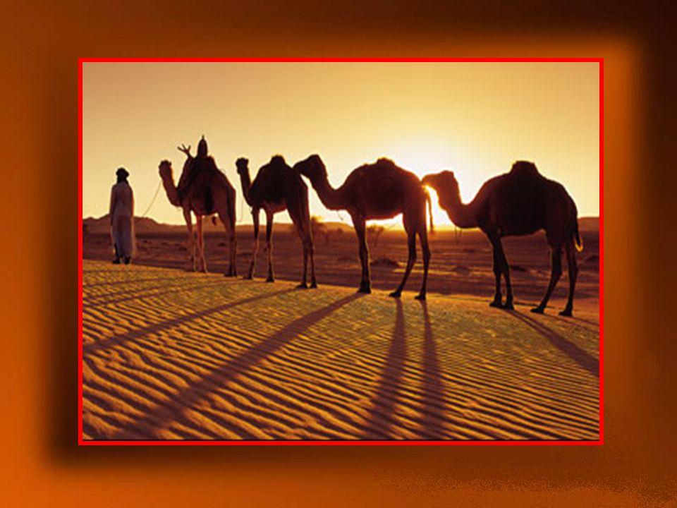 Τελικά, συναντήθηκε με το σοφό γέροντα, αφού χρειάστηκε να κάνει ένα μακρινό ταξίδι, διασχίζοντας ένα μεγάλο κομμάτι της ερήμου!