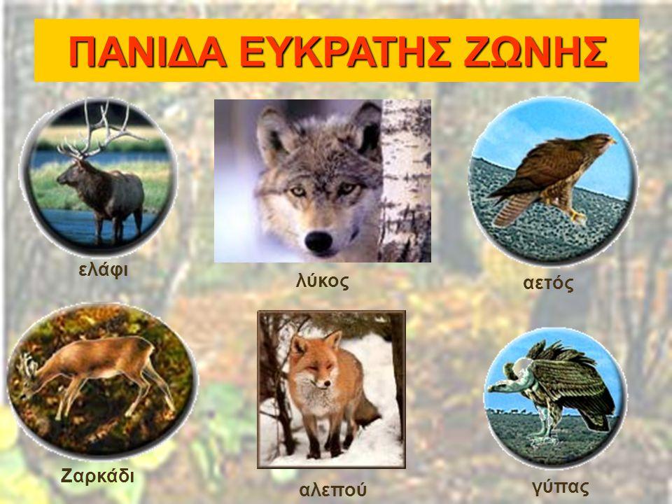 λύκος αλεπού αετός γύπας ελάφι Ζαρκάδι ΠΑΝΙΔΑ ΕΥΚΡΑΤΗΣ ΖΩΝΗΣ