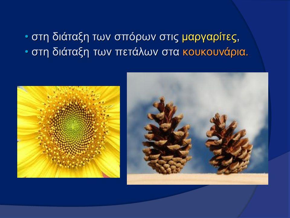 στη διάταξητων σπόρων στις μαργαρίτες, στη διάταξη των σπόρων στις μαργαρίτες, στη διάταξη των πετάλων στα κουκουνάρια. στη διάταξη των πετάλων στα κο