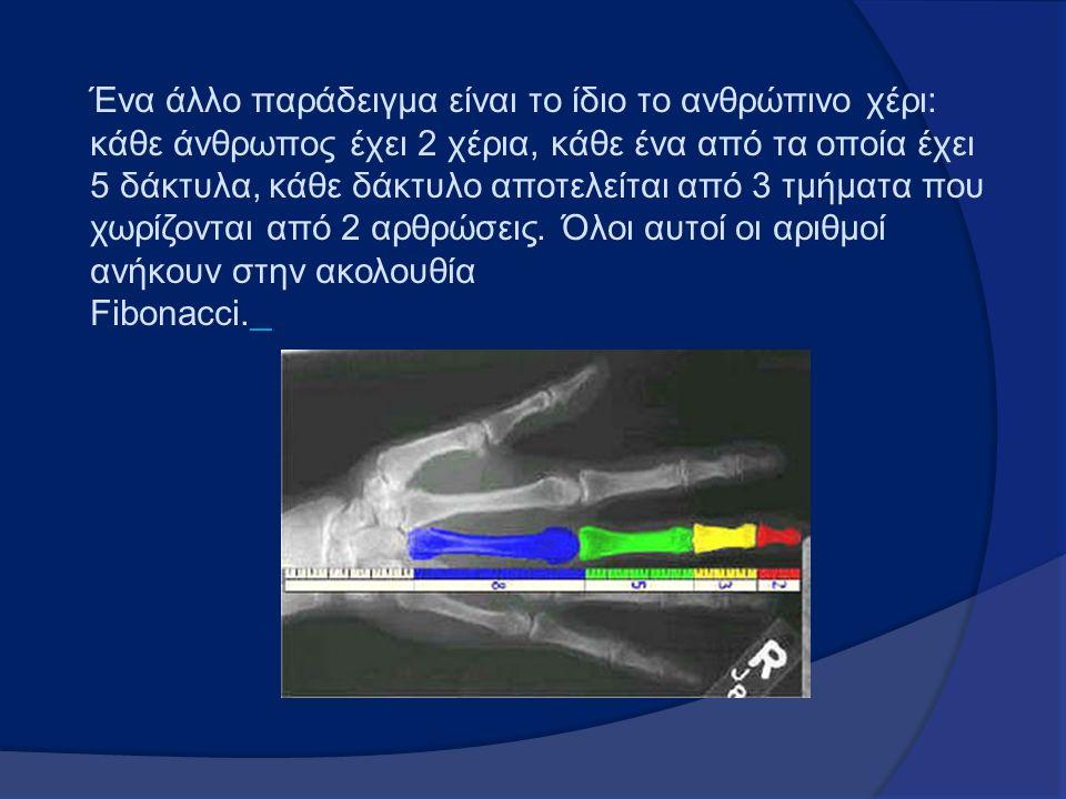 Ένα άλλο παράδειγμα είναι το ίδιο το ανθρώπινο χέρι: κάθε άνθρωπος έχει 2 χέρια, κάθε ένα από τα οποία έχει 5 δάκτυλα, κάθε δάκτυλο αποτελείται από 3
