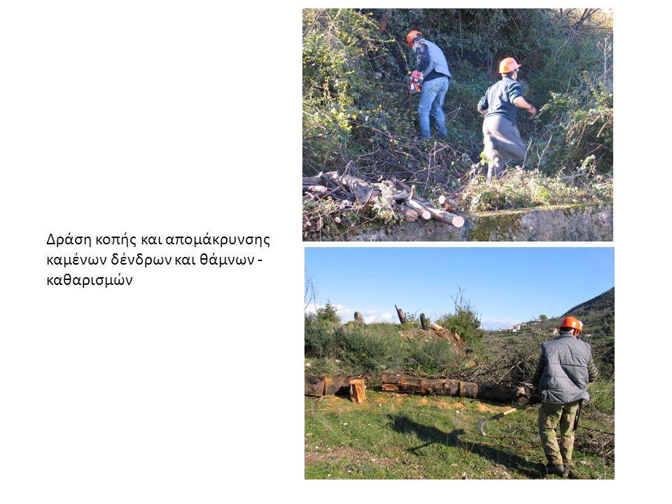 Πριν τη δράση κοπής και απομάκρυνσης καμένων δένδρων και θάμνων