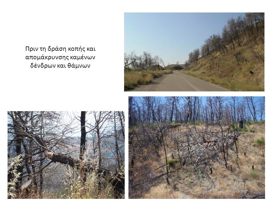 Μετά τη δράση κοπής και απομάκρυνσης καμένων δένδρων και θάμνων