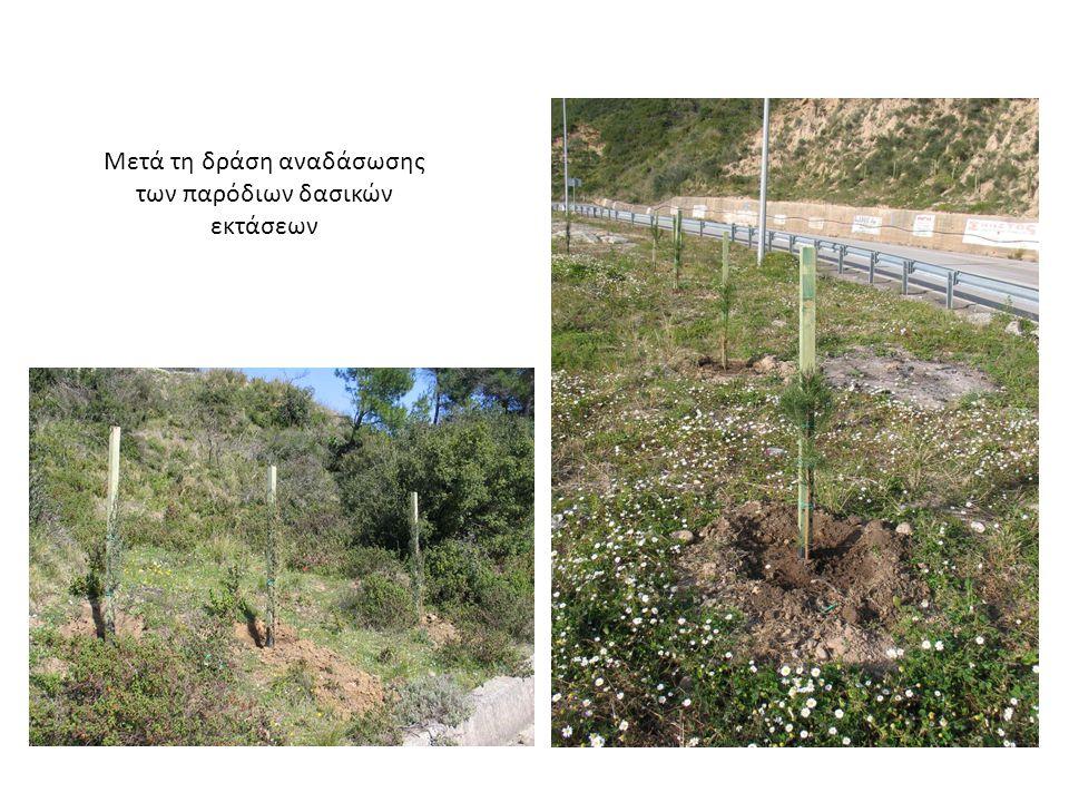 Μετά τη δράση αναδάσωσης των παρόδιων δασικών εκτάσεων