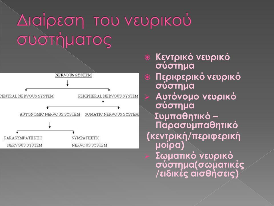  Κεντρικό νευρικό σύστημα  Περιφερικό νευρικό σύστημα  Αυτόνομο νευρικό σύστημα Συμπαθητικό – Παρασυμπαθητικό (κεντρική/περιφερική μοίρα)  Σωματικ