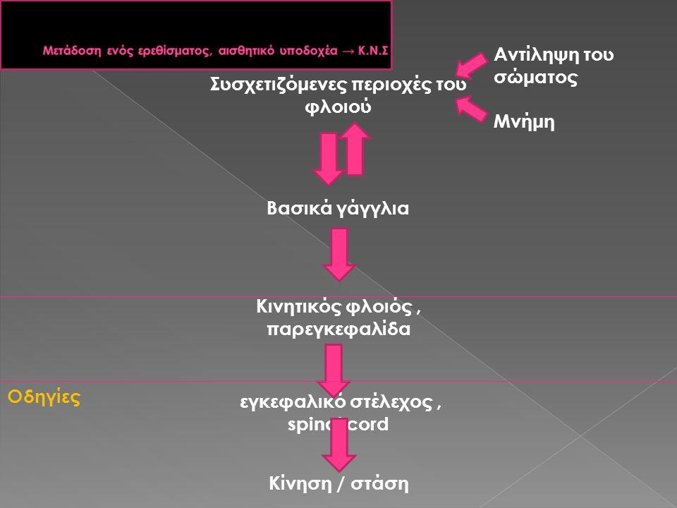 Συσχετιζόμενες περιοχές του φλοιού Βασικά γάγγλια Κινητικός φλοιός, παρεγκεφαλίδα εγκεφαλικό στέλεχος, spinal cord Κίνηση / στάση Αντίληψη του σώματος